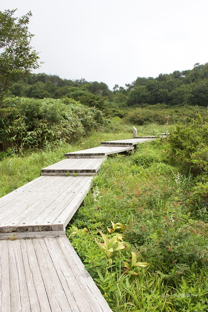湿原地帯の木道の途中