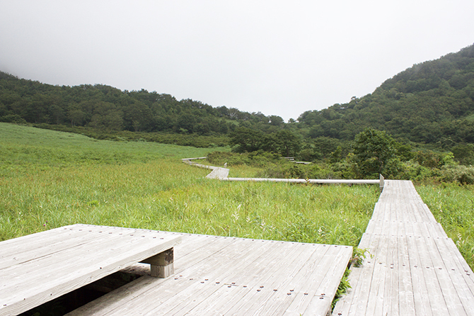 湿原地帯の木道