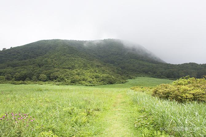 湿原地帯への脇道