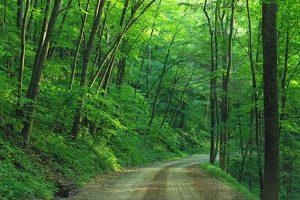 森の中の砂利道